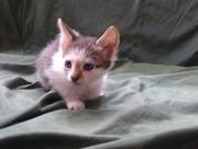 Подарим котят в добрые руки