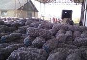 Картофель опт от 5 тонн 3, 50