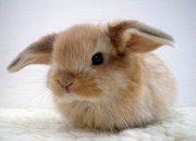 Кролики продам чернівці
